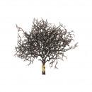 Verbena Sivas, x2 stems, L34cm, aubergine